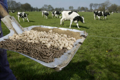 Growth in EU cattle feed production. Photo: Hans Prinsen