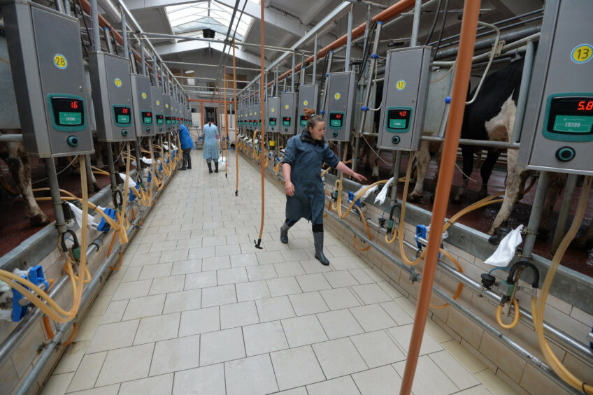 Russia s dairy industry is growing, but still faces many challenges, such as trade barriers and disease outbreaks. Photo: KSUP Veletin