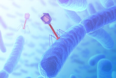 Bacteriophage are viruses (with genetic material) that infect bacteria. Photo: Proteon Pharmaceuticals