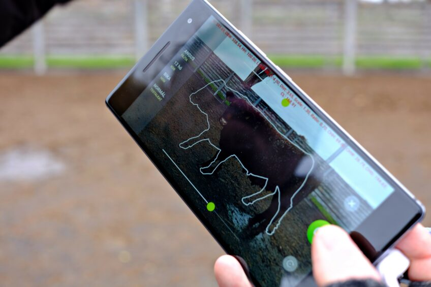 New  Beefie  app for worry-free cattle weighing. Photo: Agroninja