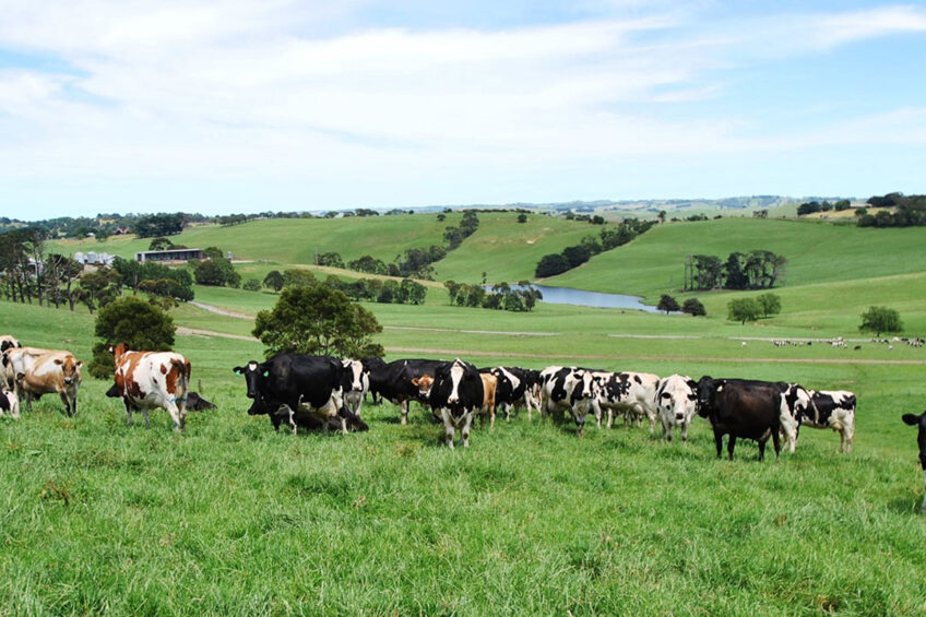 South Gippsland with its rolling green hills is known for its dairy industry. Photo: SG Dairy