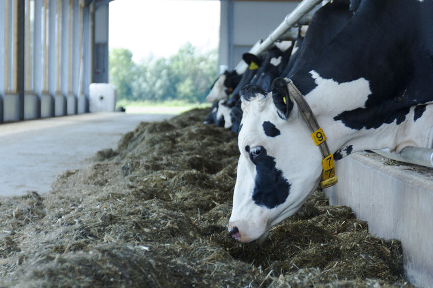 Price fluctuations decrease in dairy market. Photo: Galama Media