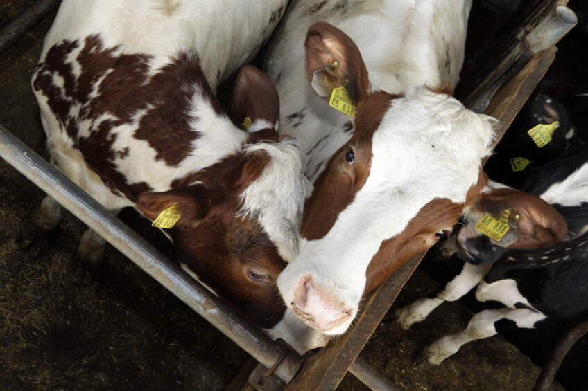 Facial recognition of dairy cows: ONE: The Alltech Ideas Conference