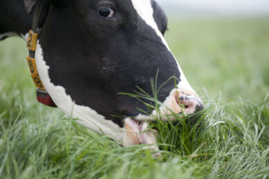 New research claims health benefits of grass-fed milk. Photo: RBI