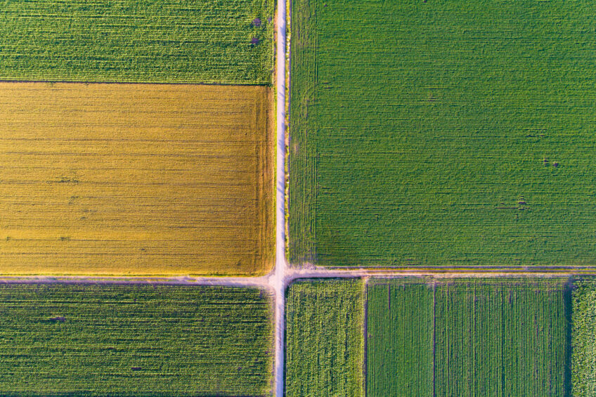 Global agriculture at a critical crossroads. Photo: Budimir Jevtic