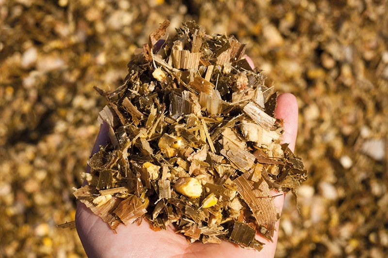 Get more out of your corn silage. Photo: Stockphoto/jess311