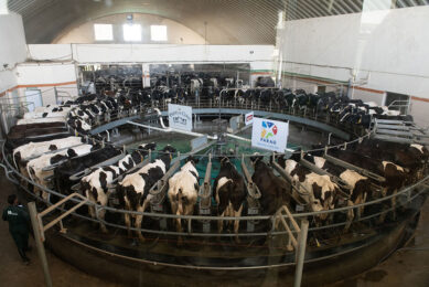 A 50-point GEA rotary parlour is in operation where 50 cows can be milked within 7 minutes. Photo: Parag Milk Foods Ltd