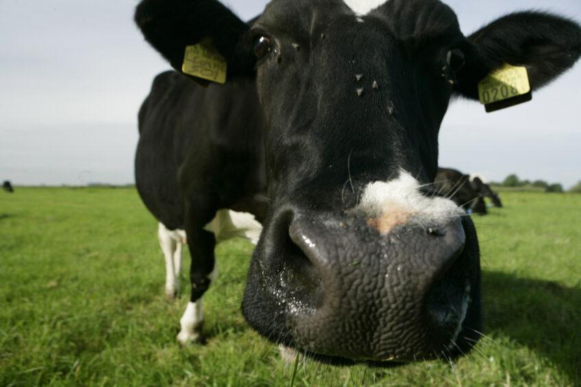 3 scenarios to lower methane output. Photo: Michel Zoeter