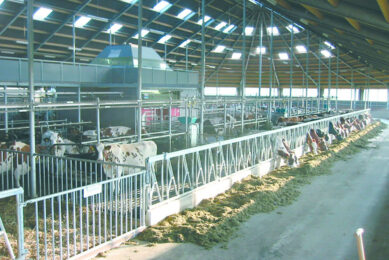 Sufficient lighting as well as a good view of the whole shed are necessary to observe all the animals, here the central stucture is causing an obstruction.Photo: Roodbont