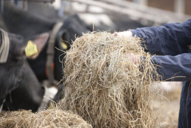 Buffers should not compensate for suboptimal feeding management. Proper feeding management should be considered based on the animal requirements at given production levels. Photo: Mark Pasveer