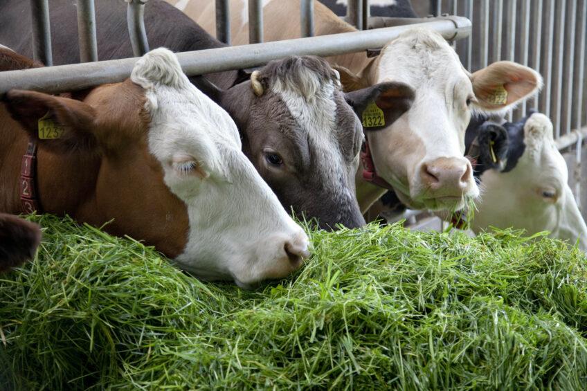 4 factors that influence forage quality.  Photo: Jan Willem Schouten