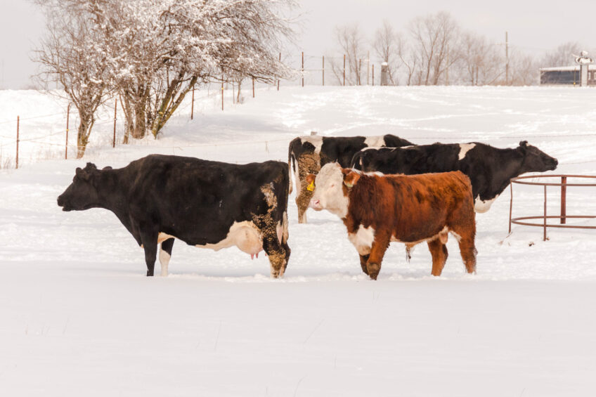 Big storm hits Texas dairy industry and future milk supply