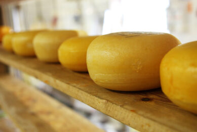 Dutch dairy companies processed an estimated 13.85 billion kg of milk in 2019, with cheese production showing a particular increase (more than 1%) . Photo: Pixabay