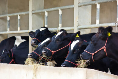 International dairy prices show no sign of recovery