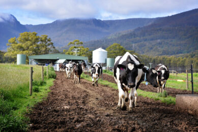 There are about 5,200 dairy farmers in Australia, of which close to 50 have invested in AMS. Photo: Milking Edge