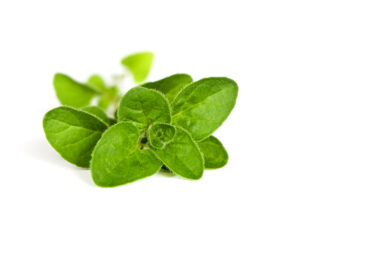 Cow methane be reduced by oregano