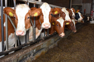 Having someone else rear the replacement heifers not only releases a lot of time for the farmer and housing demand, the practice can also be essential on some farms trying to keep their farms under Nitrates Directives quotas. Photo: Chris McCullough