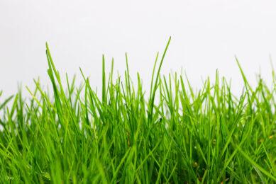 FAO to study optimum grass use