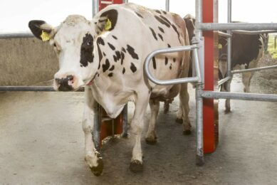 New system to automatically register grazing. Photo: Lely