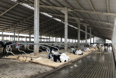 On Epp s Regia Farm, almost all livestock is housed indoors, and even pastured cattle are bunk fed. That s due to a lack of available pasture land as well as a highly variable climate. Photo: Lilian Schaer