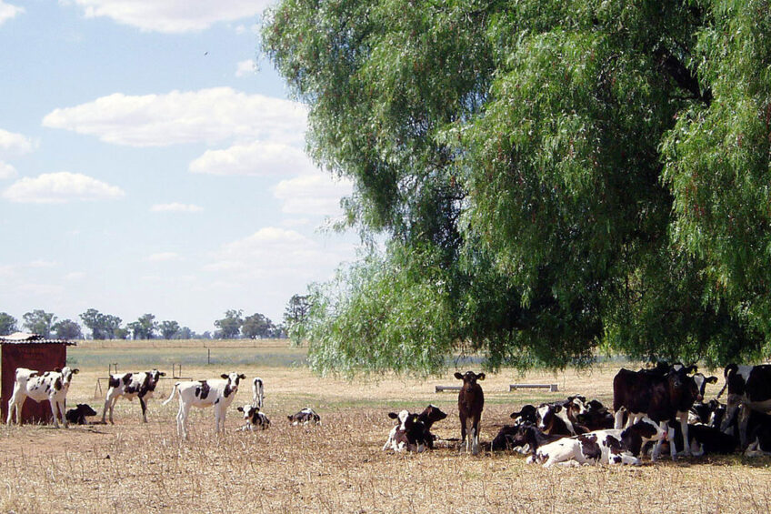 Around 150 heifers per year are reared on the farm. Photo: Chris McCullough