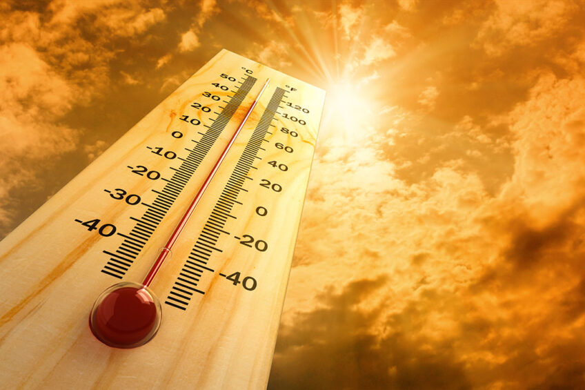 To prevent heat stress, feed when it is cool. Producers can feed twice daily to help maximise intakes. Ideally more of the total mixed ration (TMR) should be offered at the coolest part of the day. Photo: Shutterstock