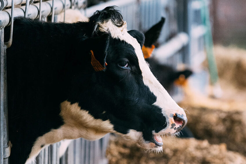 The No-Methane triple action feed additive aims to reduce enteric methane emission from cattle by blocking the enzymatic process, suppressing methanogens and draining the hydrogen substrate. Photo: Brecht Denil