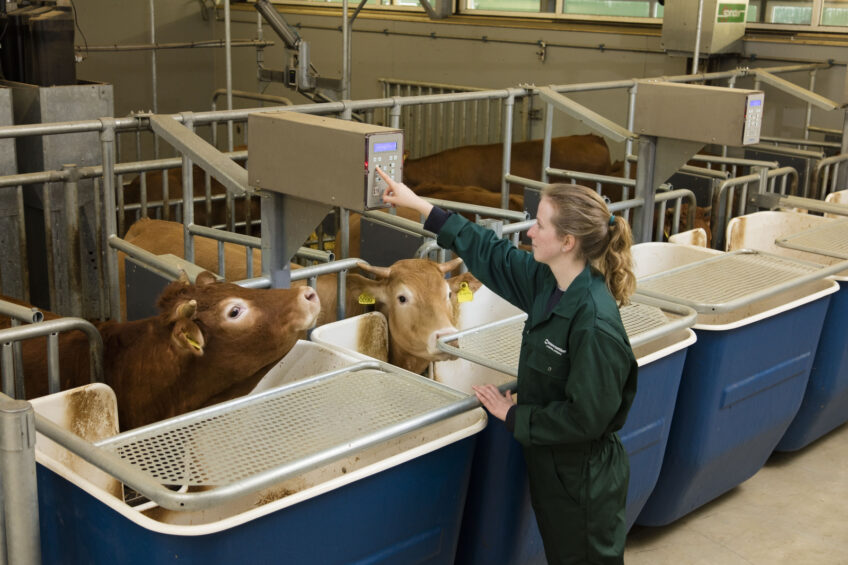 Photo Report: New calf and beef research facility