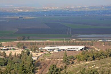 Cows at the kibbutz is purely a production asset