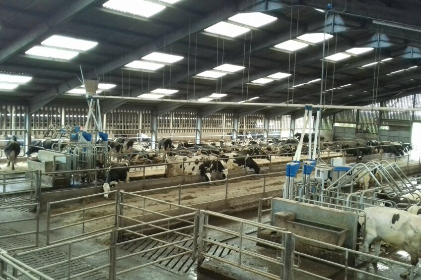 Cow bullying reduced with new feeders