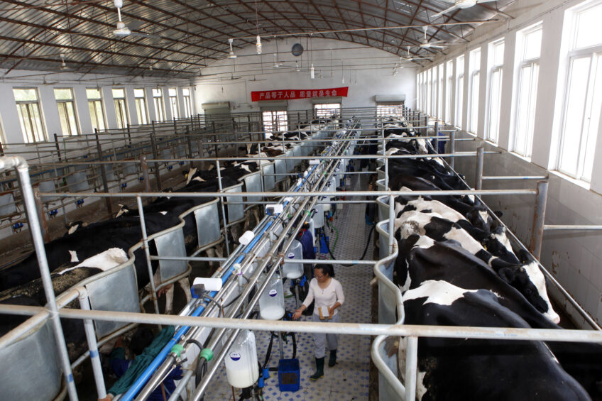 China is not a cheap place to produce milk