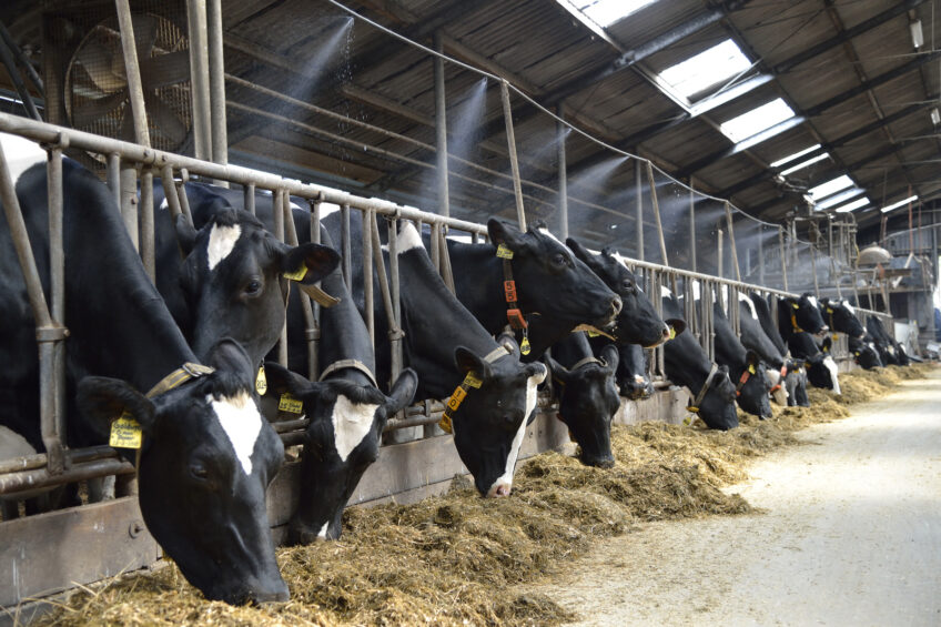 Application of heat stress knowledge in dairy