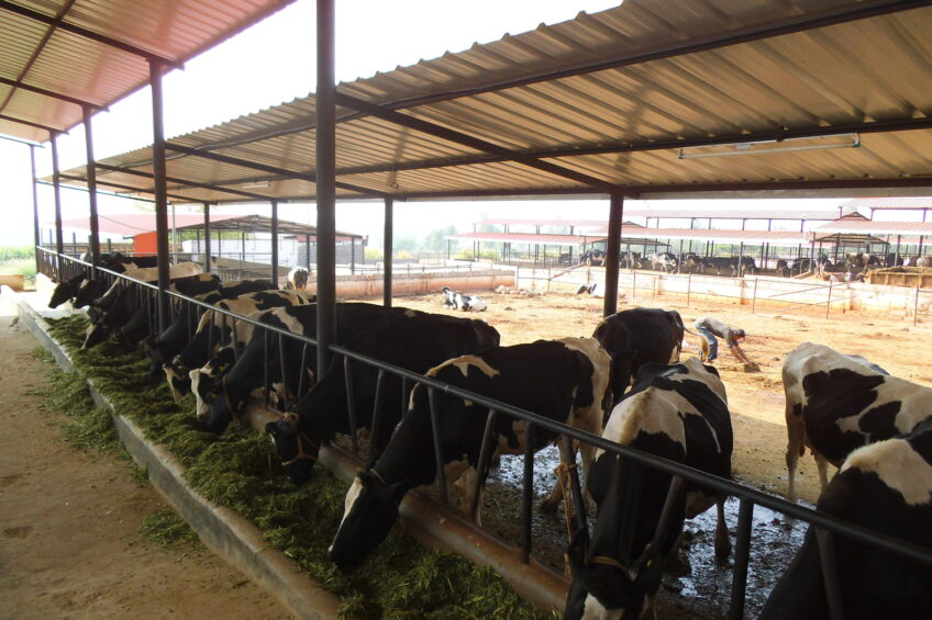 Dairy farming sector in India experiences a rapid growth