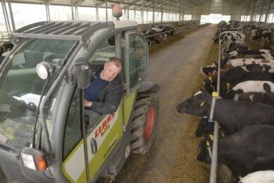 Six entrepreneurs, 500 cows