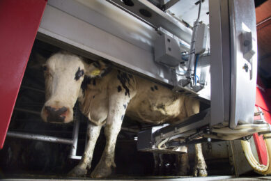 Milking automation is gaining popularity