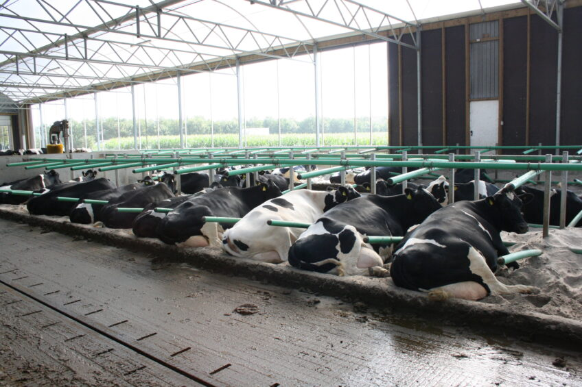 Optimal conditions for modern day dairy cows