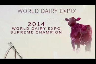 Goldwyn daughters rule 2014 international Holstein show