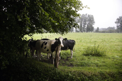 Act early to reduce dairy cow heat stress