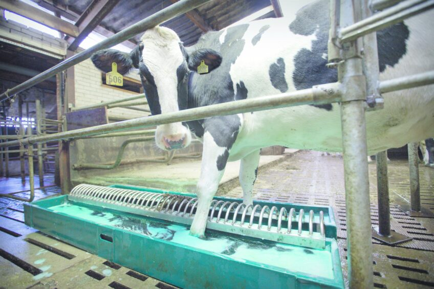 Labour-friendly hoof care for dairy cattle