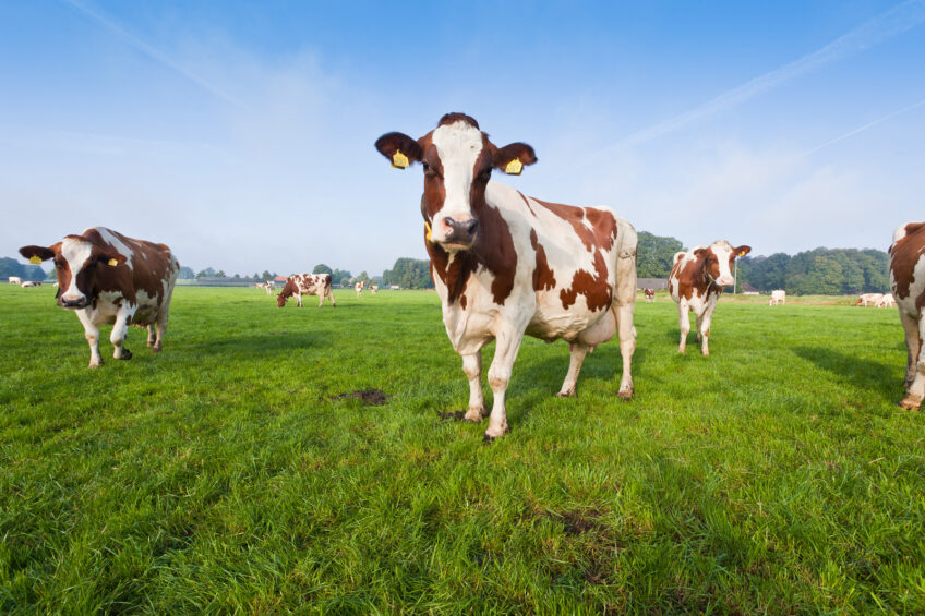 """EDA: """"Dairy sector can be confident for the future"""""""