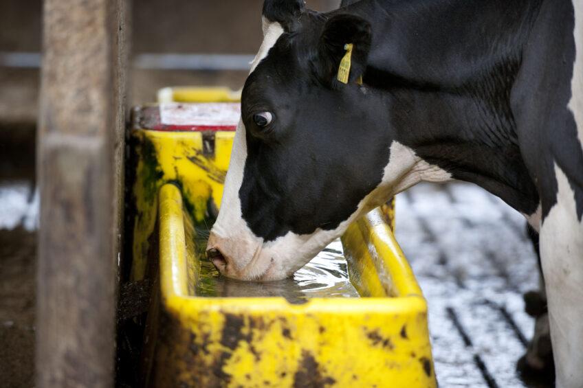 Heat stress: an increasing risk for European cows