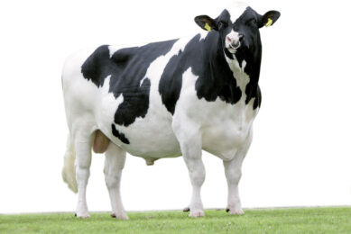 """""""Farmers want easy and functional dairy cows"""""""