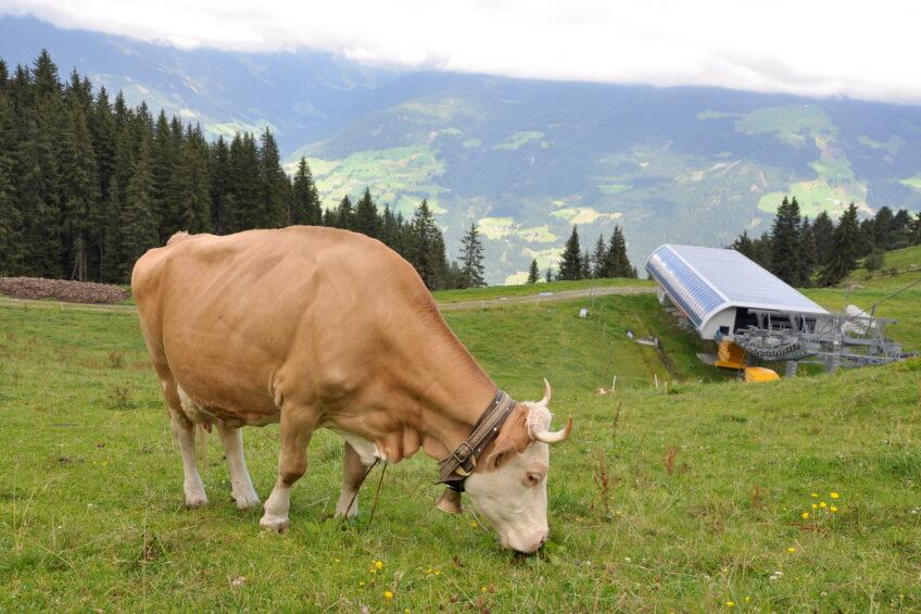 Alpine farmers milking a good living