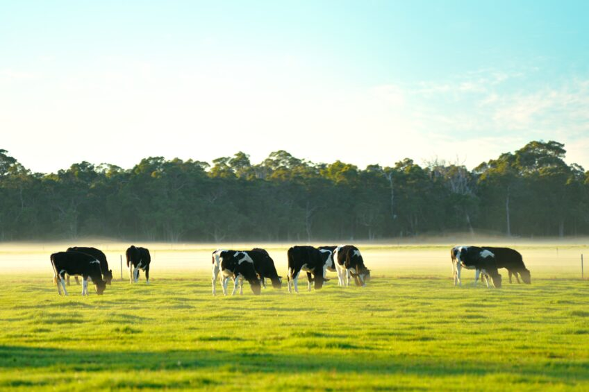 Australia to welcome UK and Irish dairy farmers