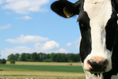 """QGG project manager, Coralia Manzanilla Pech says, """"If we want to reduce methane emissions in dairy cattle, it is time to start taking action, for instance like finding the way of including methane in the breeding goal or in an efficiency index."""" Photo: Dreamstime"""