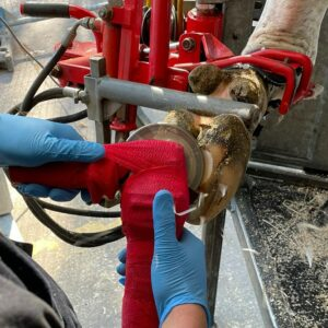 Barriers to lameness management: What still needs to happen?
