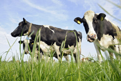 NZ dairy industry continues to dominate through growth
