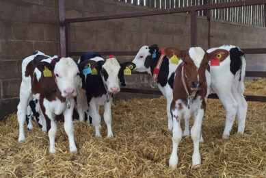 Recent research shows UK dairy farmers are keen to 'buy British' when it comes to investing in high quality young animal nutrition for the next generation of milking cows. Photo: Volac