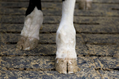 Face recognition helping prevent lameness Photo: Koos Groenewold
